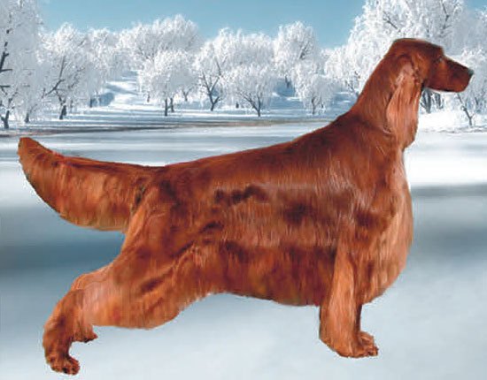 Morgan - Eirean Irish Settler Cryogenes