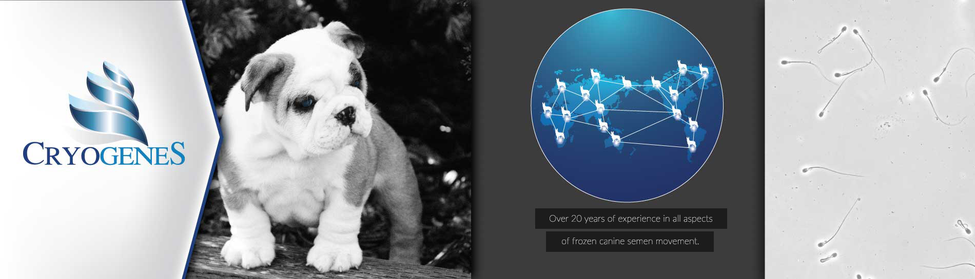 Services By Cryogenes - Canine Frozen Semen Transportation